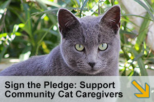 Sign the Pledge: Support Community Cat Caregivers