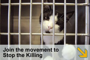 Stop the Killing Petition