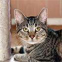 AdoptMe_CatCat.jpg