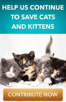 Help Us Save Kittens and Cats