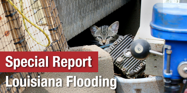 Special Report: Louisiana Flooding