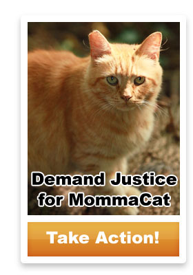 Demand Justice for MommaCat