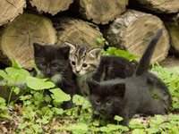 Kittens by a woodpile