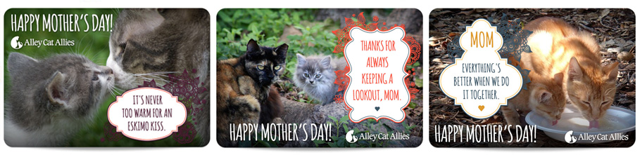 mother's day 2013 ecards group