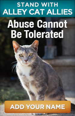 Stand with Alley Cat Allies: Abuse cannot be tolerated. Add your name.