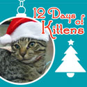 12 Days of Kittens - Edan wearing Santa Hat