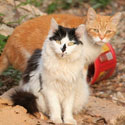 Black and White Cat and Orange Cat on Rocks