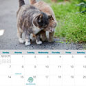 Alley Cat Allies Calendar