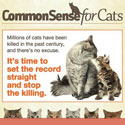Common Sense for Cats
