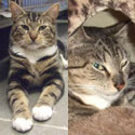 Adoptable Cats: Donnie and Marie