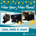 Adoptable Black Cats