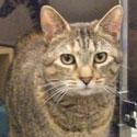 Adoptable Cat - Sabrina