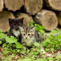 Ohio Woodpile Kittens