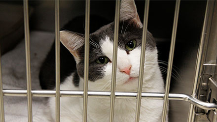 Cat in cage in shelter
